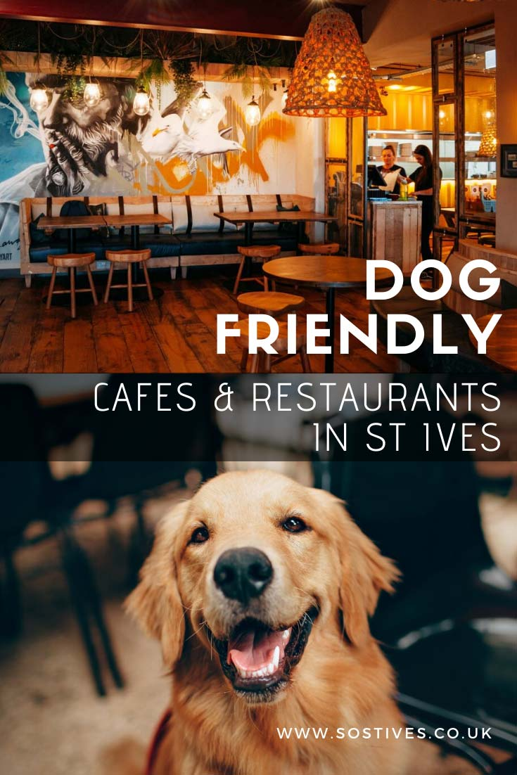 dog-friendly-cafes-restaurants-in-st-ives