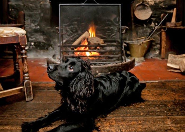 st-ives-dog-friendly-pub