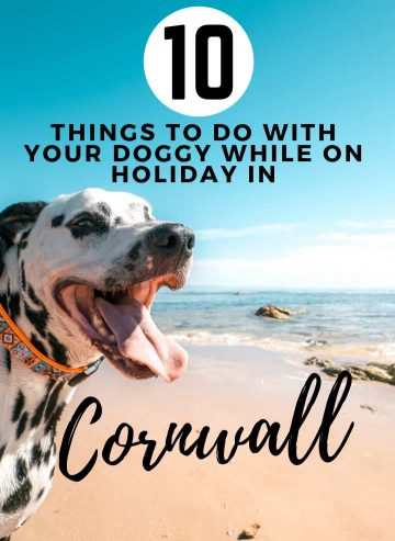 things-to-do-with-your-doggy-in-cornwall
