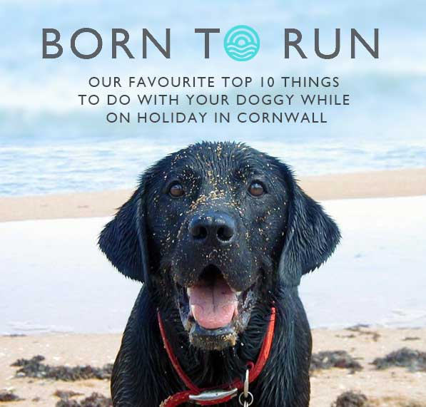 Top-ten-things-to-do-with-your-doggy-in-cornwall