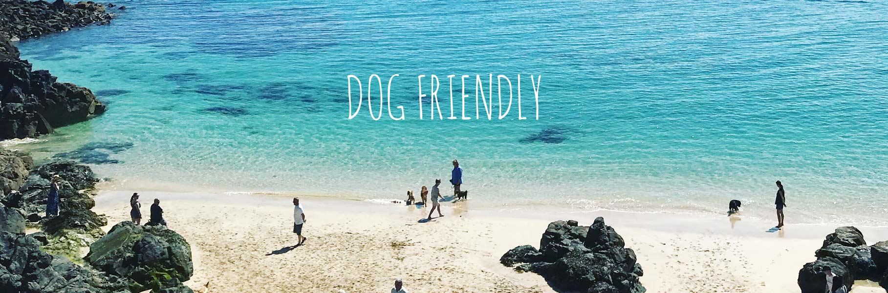 dog-friendly-places-to-stay